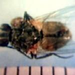 ibutsu-2